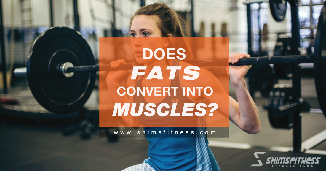 fat convert into muscle